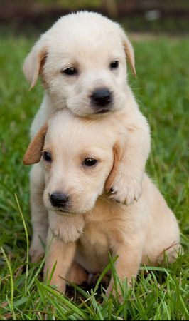 What a sweet capture! Adorable puppies!