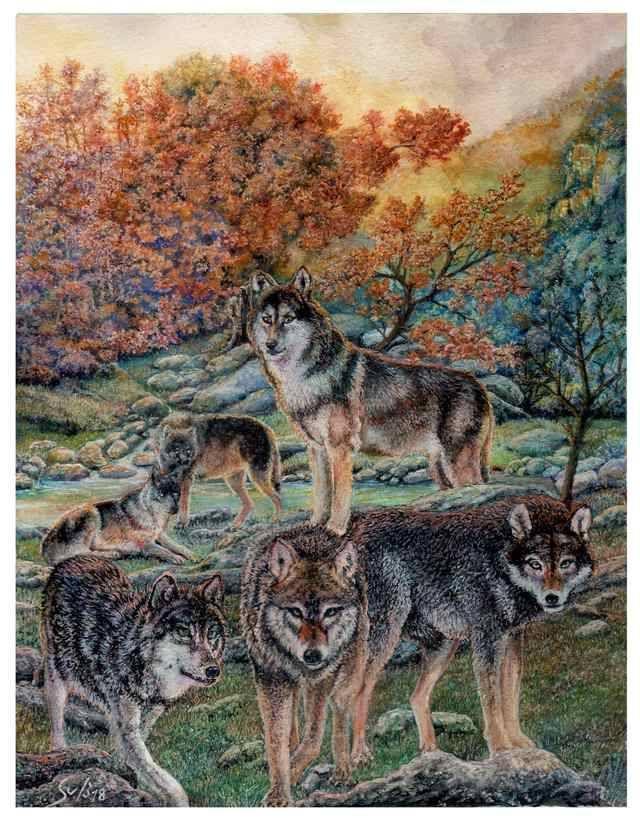 Wolves at Dawn