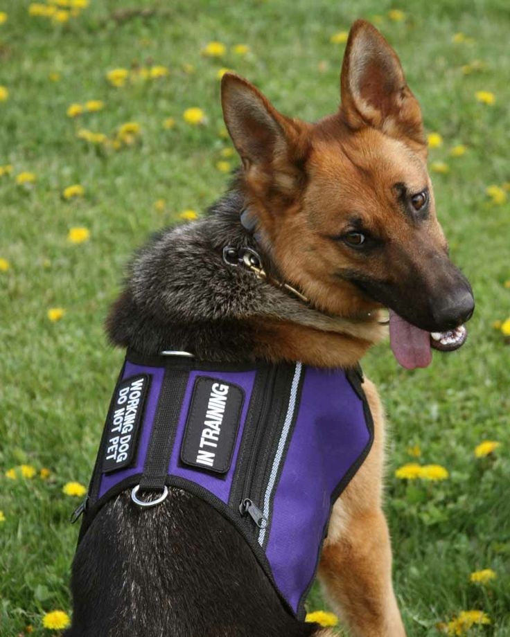 Butterfly Dual Pocket Service Dog Vest in Purple from