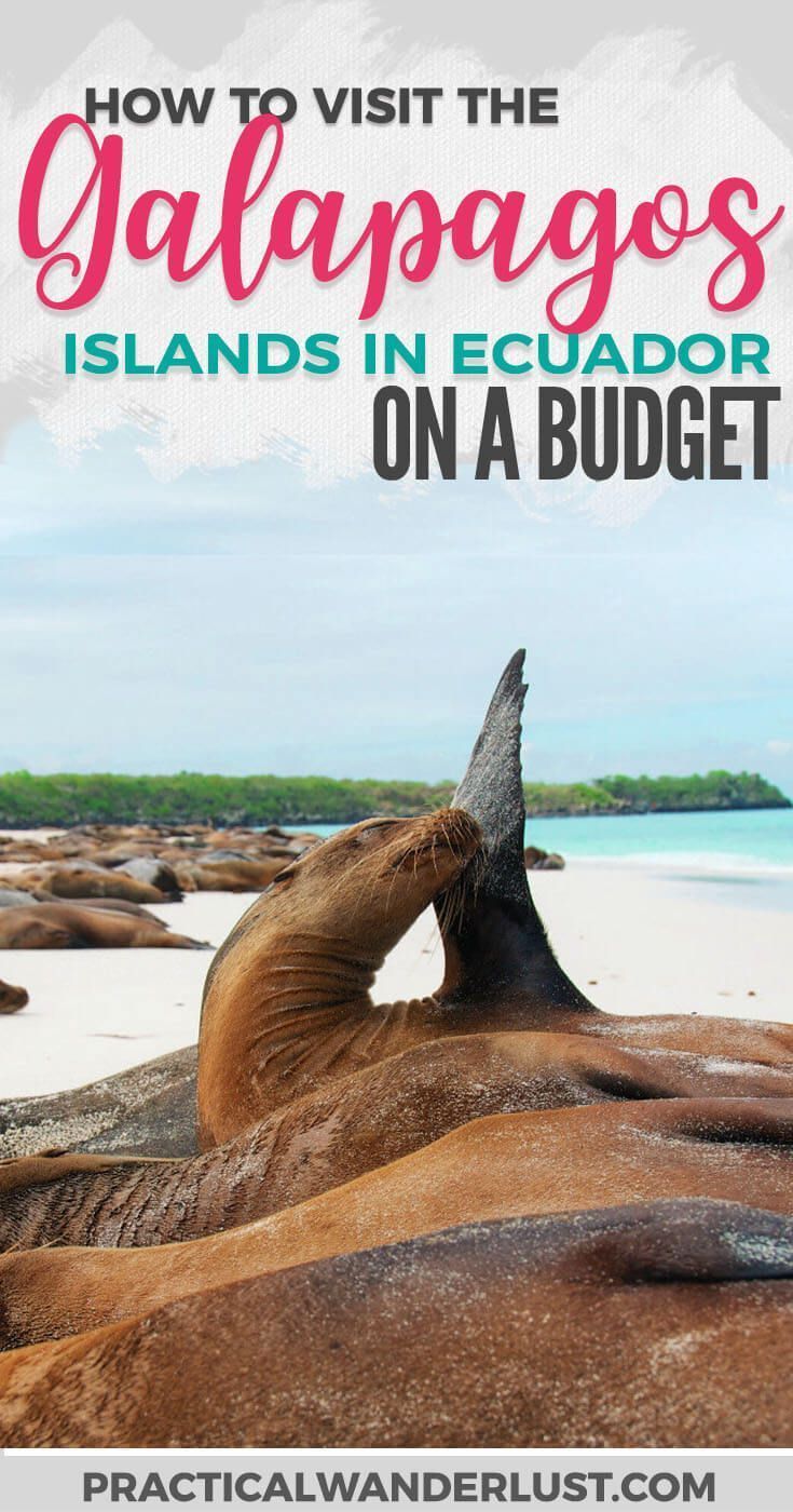 You don't need a cruise to see the Galapagos Islands in Ecuador. Save a ton of money with this budget-friendly alternative to Galapagos Islands travel! Visit one of the most popular vacation destinations in South America and save a ton of money.