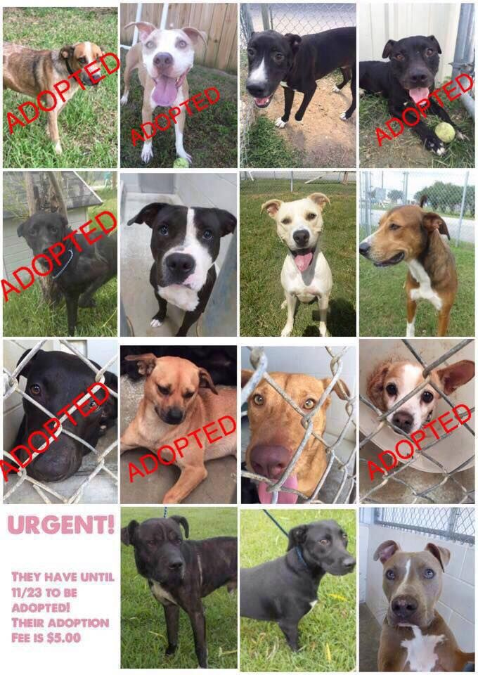 11/20/16- 8 dogs have until Wed., Nov 23 to get OUT of the shelter. PLEASE share!!!! 8 more to go!   *URGENT! They have until November 23rd to be adopted/rescued to avoid being euthanized. Their adoption fee is $5.00.*  If your unable to adopt, please share their post in hopes someone can save them.   281-342-1512 1210 Blume Rd, Rosenberg TX