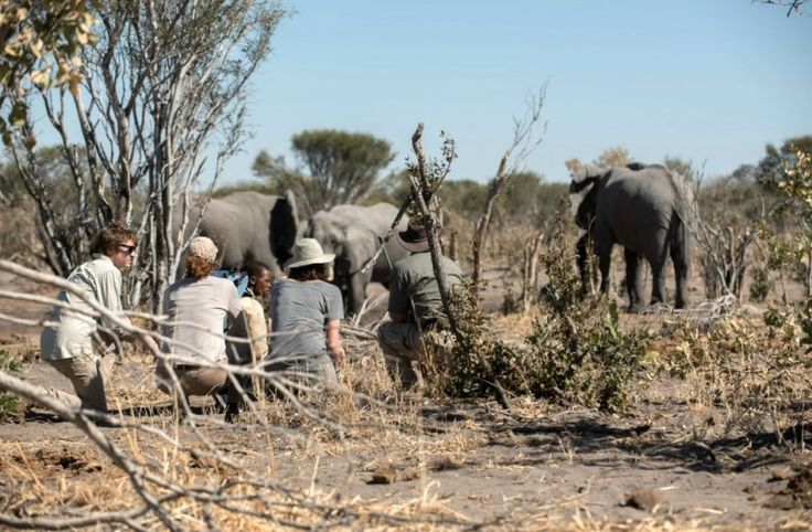 Could this 10-day getaway be the safari of your dreams? Browse the itinerary, get an instant quote & customise your tour online for this Botswana + Cape Town experience: