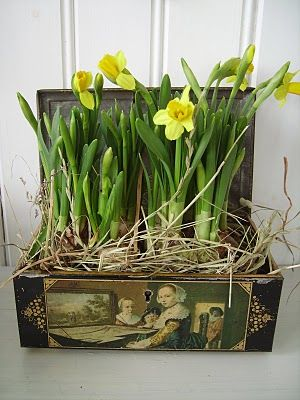 Norregård: påsk: Old Boxes, Old Trunks, Container Garden, Craft, Old Suitcases, Spring Thing, Daffodils Planted, Springtime