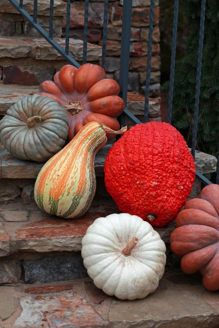 Blue Jarradale pumpkin, tricolor Cushaw, White Casper pumpkin, Fairytale pumpkin and Red Warty Thing Squash