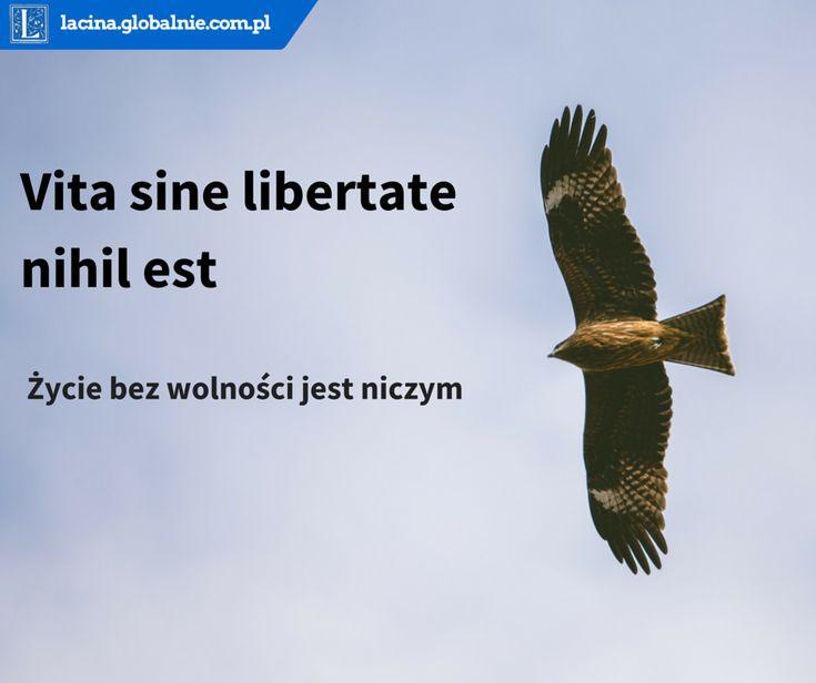 #wolność #freedom #11listopada #11listopad #niepodległość #łacina  http://lacina.globalnie.com.pl/cytaty-lacinskie/