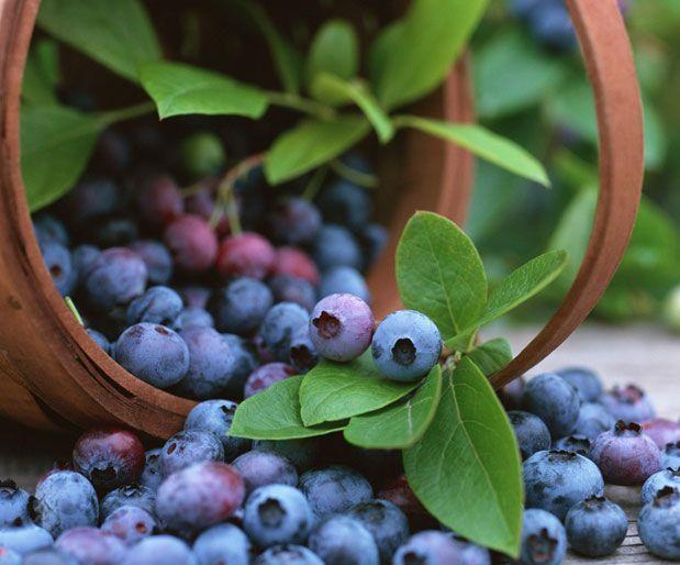 Yaban Mersininin Gücünü KeşfedinYaban mersininde diğer bütün şifalı bitkilerden daha fazla oranda anti oksidan madde vardır. Yalnızca bu özelliği dahi yaban mersinin önemli şifalı bitkiler kategorisine sokmaktadır. Genel olarak yaban mersininde;        Antosiyanidinler      Tanenler      Alkoloidler(myrtine, epimyrtine)      Fenolik asitler      Glikozitler      Yazının Devamı: Yaban Mersininin Gücünü Keşfedin | Bitkiblog.com  Follow us: @bitkiblog on Twitter | Bitkiblog on Facebook