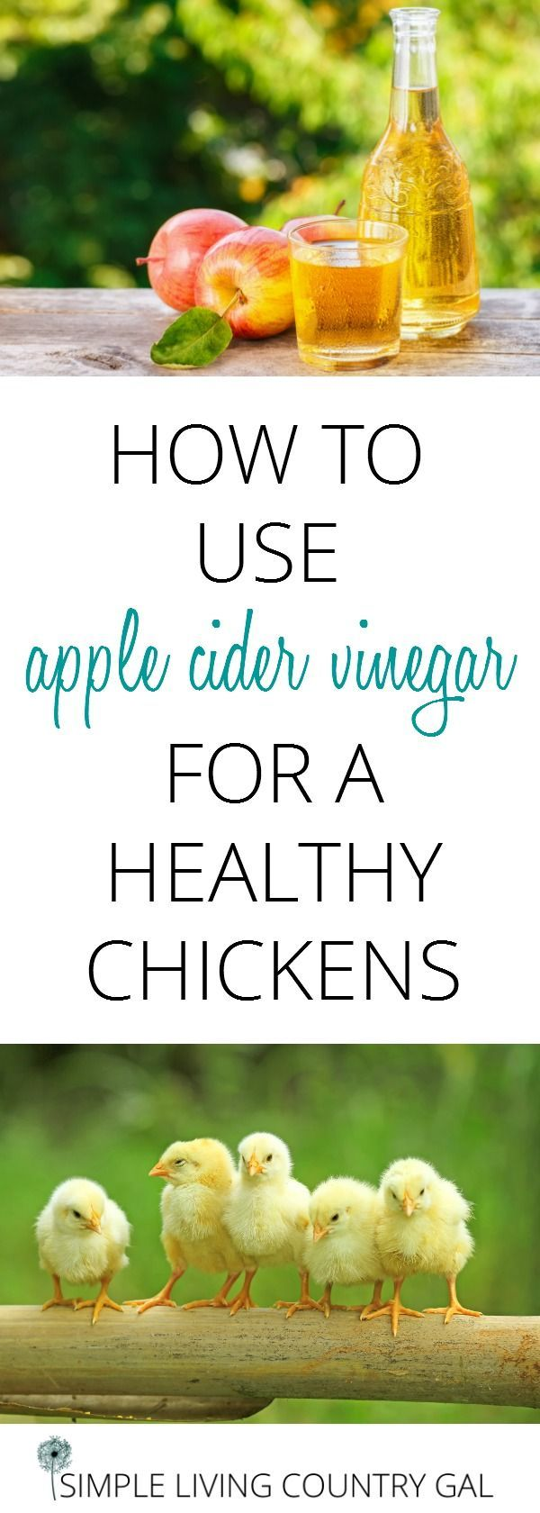531 best raising chickens images on pinterest backyard chickens