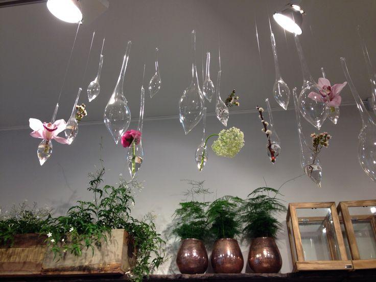 Sette blomster i vaser. Cymbidium, voksblomst.