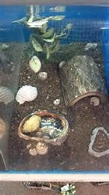 home for your Hermit Crab The Crabstreet