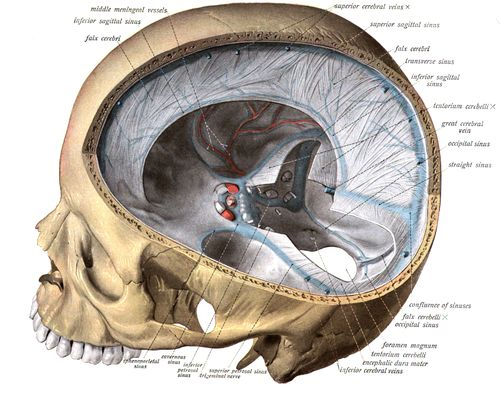 A medical illustration is a form of biological illustration that helps to record and disseminate medical, anatomical, and related knowledge.