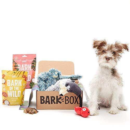 Barkbox Small Rainfurrest Dog Toy Treat Bundle Assortment