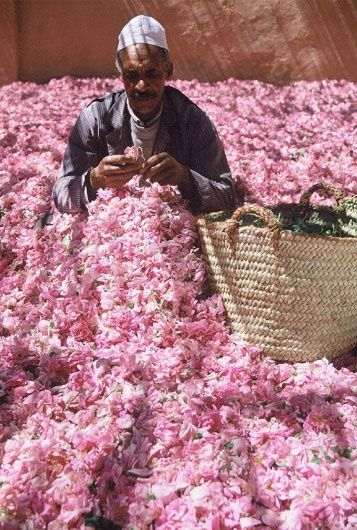 Morocco - sitting in roses