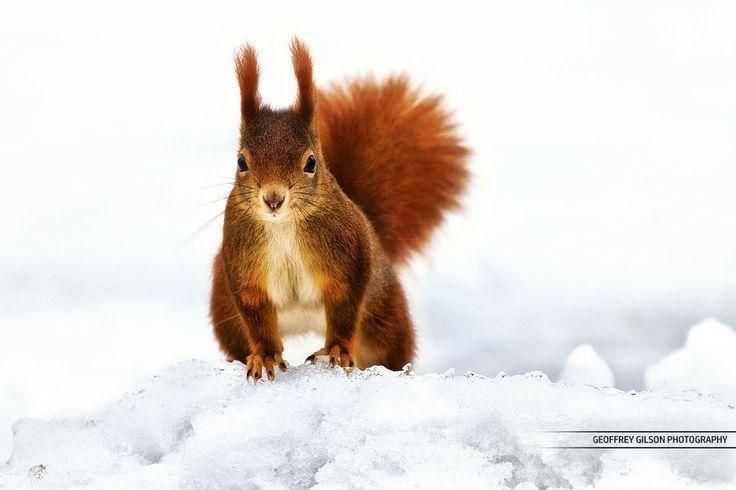 Winter wonderland's little devil by Geoffrey Gilson on 500px