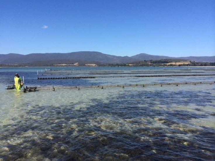 Bruny Island Tasmania – Interview Cape Bruny Oysters