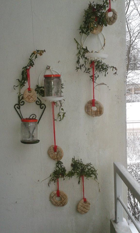 Lazy woman's Christmas decor:). Balcony wall in Helsinki, Finland, with homemade dark rye bread ornaments and frozen snapdragons. Tea candles in the jars make a pretty display at night.