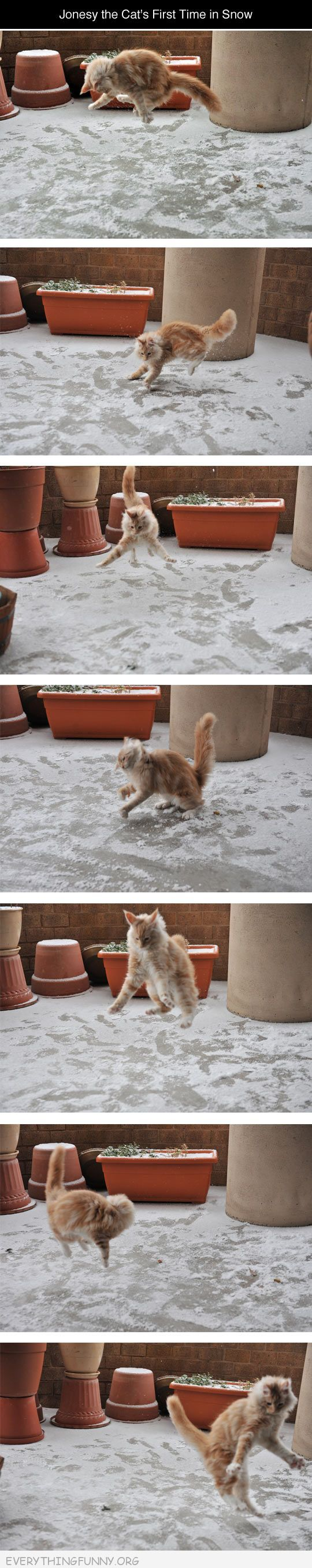 funny cat discovers snow for first time