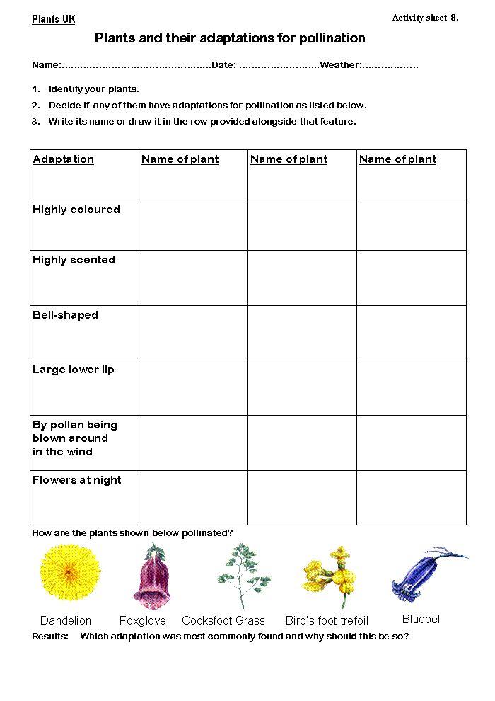 Worksheets Plant Adaptations Worksheet plant adaptations worksheet and animal teaching resource pack teach starter