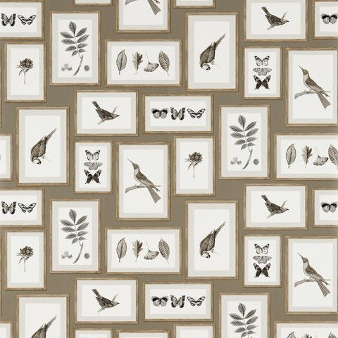 Sanderson Wallpaper: Picture Gallery in Taupe/Sepia DVOY213397 | Removable Wallpaper Australia