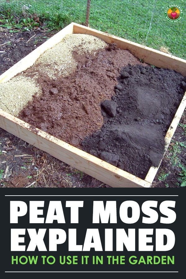 Peat Moss What It Is And How To Use It In Your Garden Soil Additives Garden Soil Peat Moss