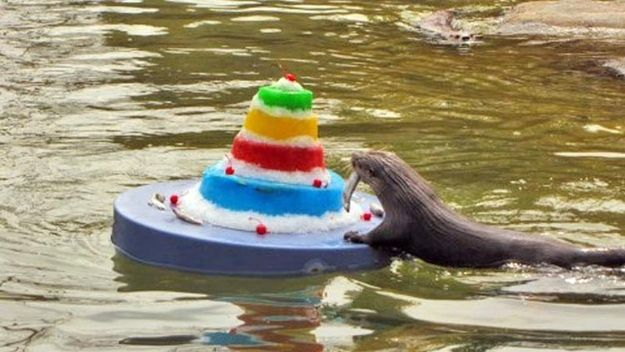 Need A Giant Floating Birthday Cake Otters Deliver