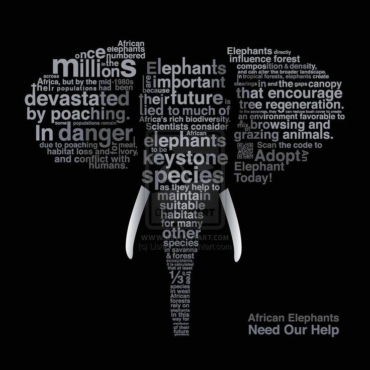 African elephants once numbered millions across Africa, but by the mid-1980s their populations had been devastated by poaching. Some populations remai