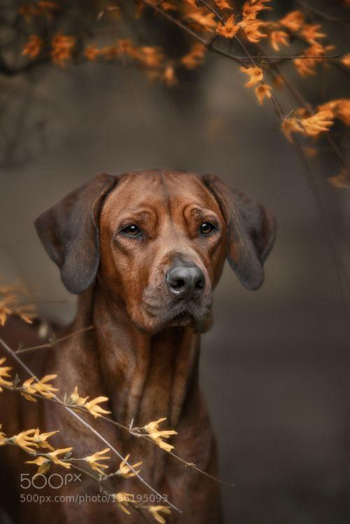 407 besten i love dogs bilder auf pinterest hunde treue. Black Bedroom Furniture Sets. Home Design Ideas