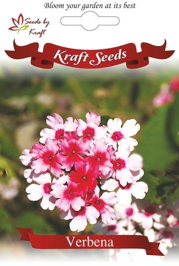 Verbena  Flower seeds, flower seeds india, flower seeds online, Sweet William, Verbena flower seeds