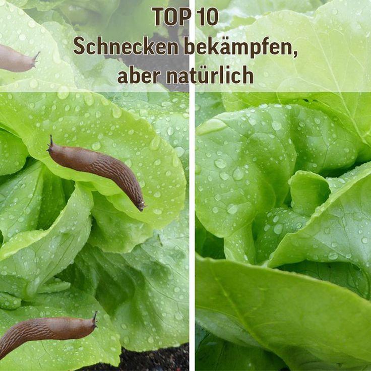 Top 10! Natürlich Schnecken bekämpfen. Mit diesen 10 Tipps bekämpfen und vertreiben Sie Schnecken aus Ihrem Garten.