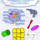 Plant and Animal Cell and tissues clipart