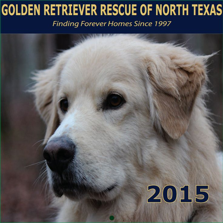 Find a golden retriever rescue