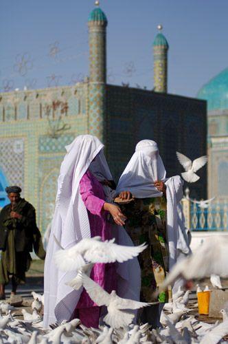 Doves. Afghanistan   Afghan Images Social Net Work:  سی افغانستان: شبکه اجتماعی تصویر افغانستان http://seeafghanistan.com