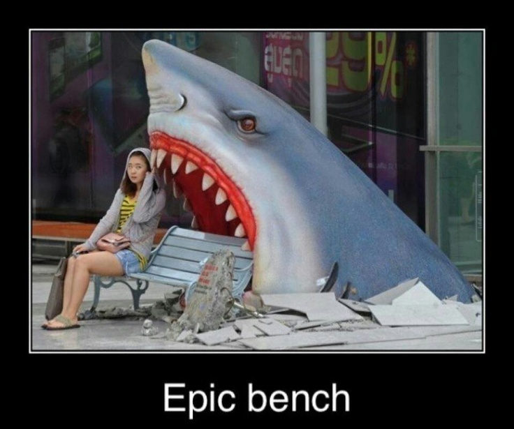 10 mejores imágenes de Sharks en Pinterest   Cosas divertidas ...