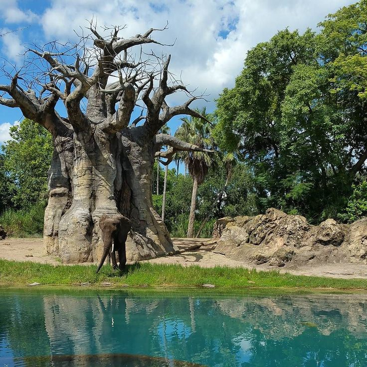 Another great use of a fast pass is the Kilimanjaro Safari at #DisneyWorld Animal Kingdom. You head out on the Savannah to see   giraffes and if you are lucky a lion.  #travel #vacation #familyvacation #waltdisneyworld #WDW #Disney #traveltips #traveltuesday #disneylove #Disneytip #animalkingdom #fastpass #fastpassrecommendations