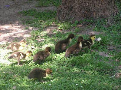 Zoo et Aquarium à Palermo. Buenos Aires avec enfants - Blog d´Elisa N | Voyages, Photos et Lifestyle