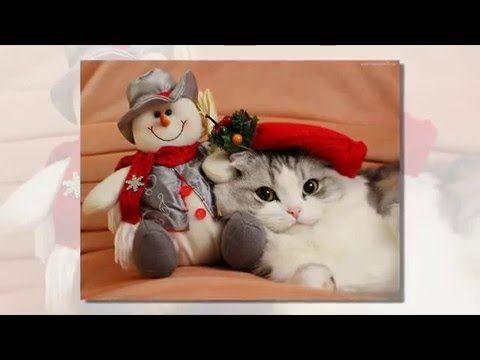 Кошки. МурНяшное Поздравление. Новый Год и Рождество/ Cats. Congratulati...