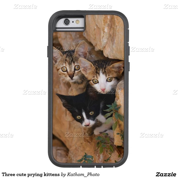 Three cute prying kittens tough xtreme #iPhone 6 case  photographed by Katho Menden #cute
