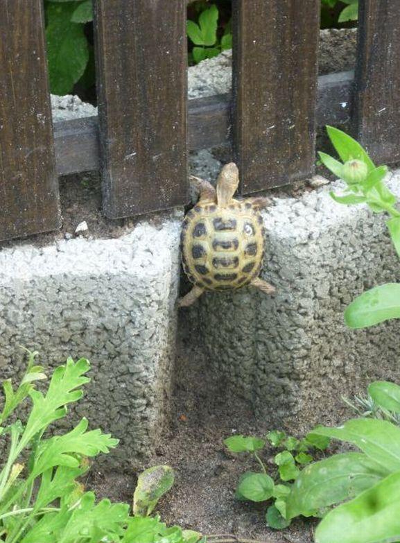 Tortugas Bebés   – Tiere