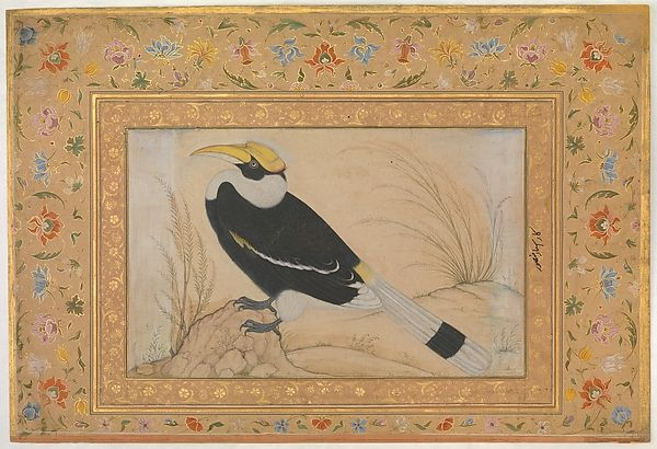 """""""Great Hornbill"""", Folio from the Shah Jahan Album Artist:Painting by Mansur (active ca. 1589–1626) Calligrapher:Mir 'Ali Haravi (d. ca. 1550) Object Name:Album leaf Date:recto: ca. 1540; verso: ca. 1615–20 Geography:Attributed to India Culture:Islamic Medium:Ink, opaque watercolor, and gold on paper Dimensions:H. 15 1/4 in. (38.7 cm) W. 10 1/2 in. (26.7 cm)"""