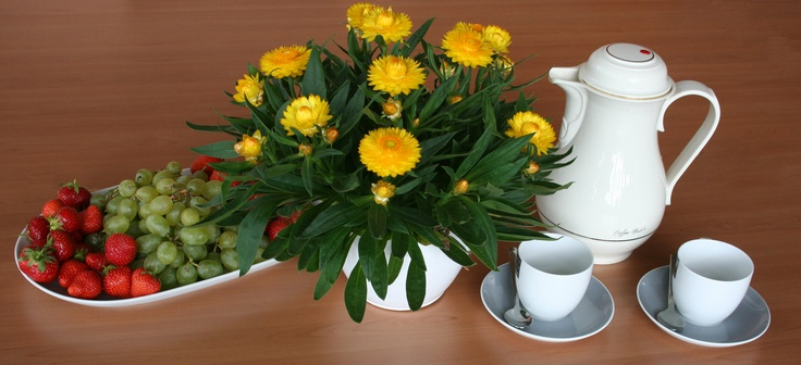 Bracteantha, or the Australian Paper Daisy. This one is known as Sundaze  'Totally Yellow' and was awarded plant of the year in Germany a few years ago.