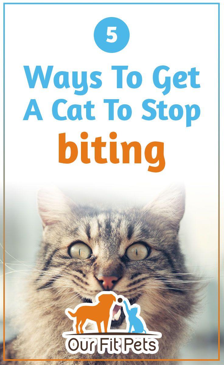5 Ways To Get A Cat To Stop Biting Cat Biting Cats Pets