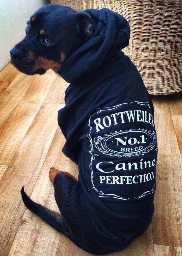 OMG I need this hoodie!!