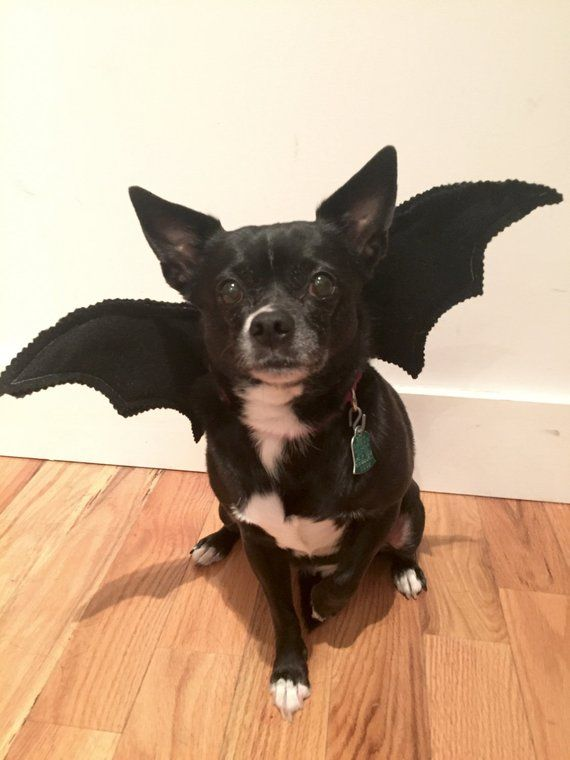 Bat Wings Dog S Bat Costume Adorable For Halloween Toy Breeds