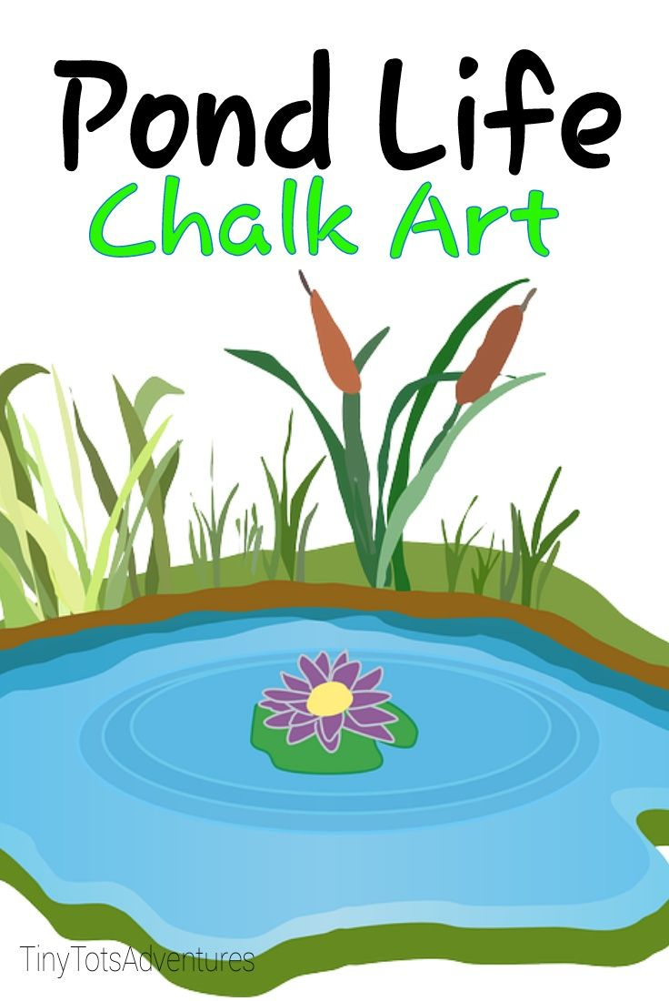 top 25 best pond life ideas on pinterest frogs preschool pond