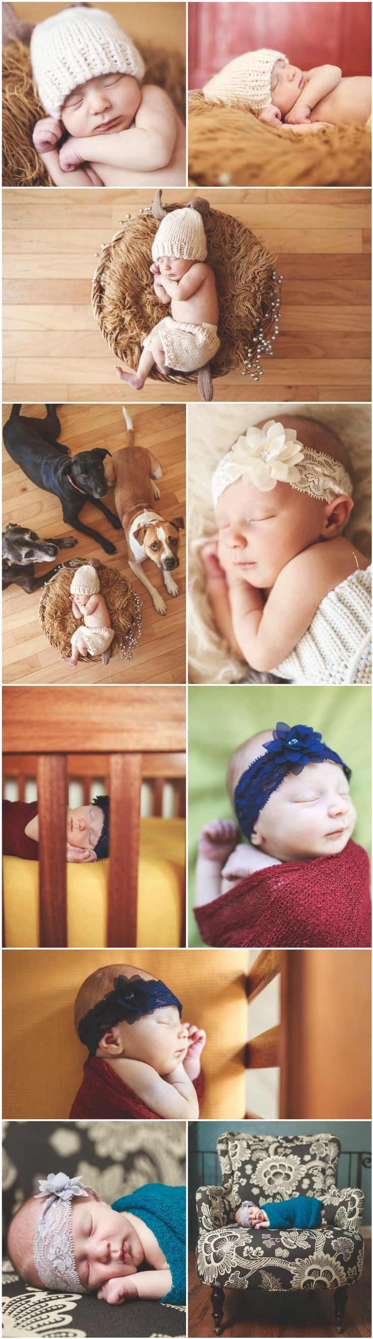 Newborn Photography Ideas and Inspiration   Newborn Poses   Denver Newborn Photographers   Cute Newborn Portraits with Dogs and Pets