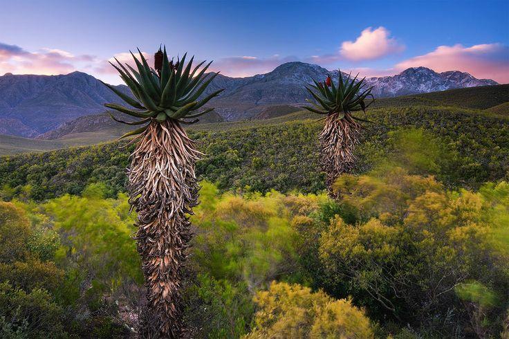 Swartberg Landscape | Southern Side of the Swartberge, Karoo