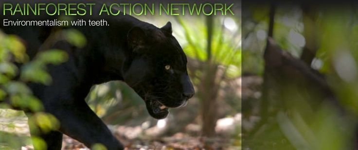 Rainforest Action Network | Environmentalism with teeth.