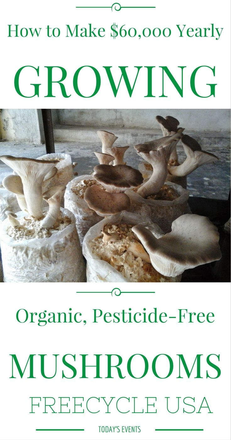How to Grow Gourmet Mushrooms and Make $60,000 Yearly - http://www.freecycleusa.com/grow-gourmet-mushrooms-make-60000-yearly/