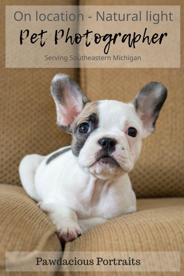 A Specialized Boutique Pet Photographer In Southeastern Michigan Metro Detroit Area On Pet Photographer Professional Pet Photography Pet Photography Studio