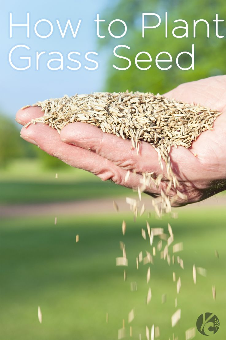 How to Plant Grass Seed || Great tips from choosing the right time of year to choosing the right seed. #grassseed