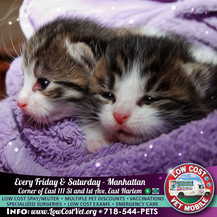 We are in MANHATTAN every FRIDAY & SATURDAY! Corner of East 111 St and 1st Ave, three blocks from the East 110 St stop on the # 6 train. M15 bus, and the Harlem River Drive. We arrive at 8:30am-rain or shine!  The Low Cost Vet Mobile has treated over 23,000 dogs and cats and performed hundreds of major surgeries in our first 8 years. Our state of the art services include digital x rays, ultrasound, echocardiogram, oxygen therapy, blood transfusion, #cryosurgery, chemotherapy, allergy…
